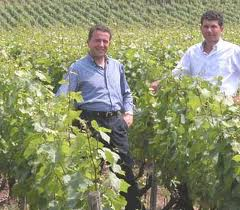 Gini brothers vineyard