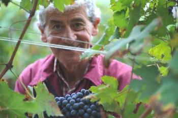 Domenico Clerico Winemaker Vineyard Barolo