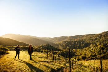 rorick heritage vineyard