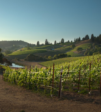 Bearwallow Vineyard